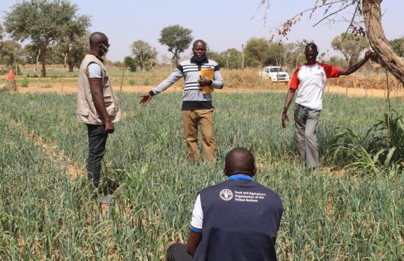 Sécurité Alimentaire dans le Zondoma: AMR et la FAO volent au secours des PDI et leurs hôtes à Mako.